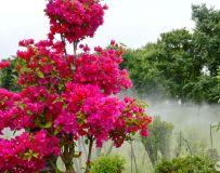 雾都茫茫看鲜花
