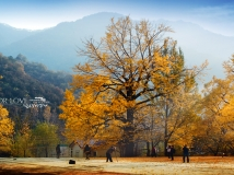 银树沟风景区