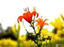 美丽的环境、美丽的花、美丽的人