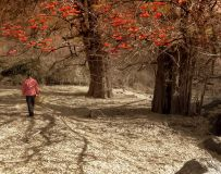 环境人像——柿子红满天(2)