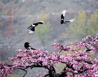 《鸳情舞燕逗春风》2