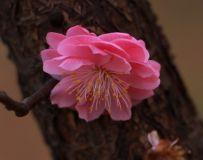 【春暖花开】5