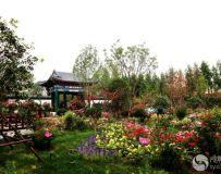 南阳世界月季大观园之风光(27)——北京园