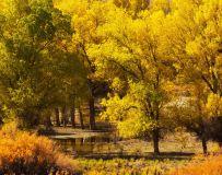 灿烂的秋4