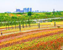 唐  河 月 季 植 物 园