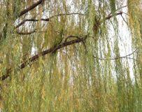 北京大运河森林公园(51)