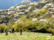 满山遍野的桃花