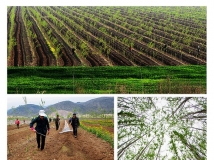 南阳生态文明建设全国摄影大赛 竹柳基地