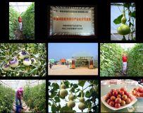 《航天育种  有机农业》(组照)