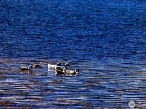 泸沽湖掠影之十二