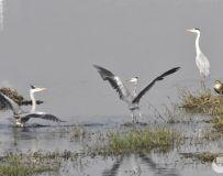 白河拍鸟一8