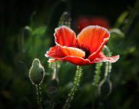 花卉随拍1