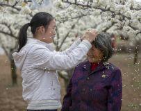 随手摘下花一朵,我为奶奶戴发间